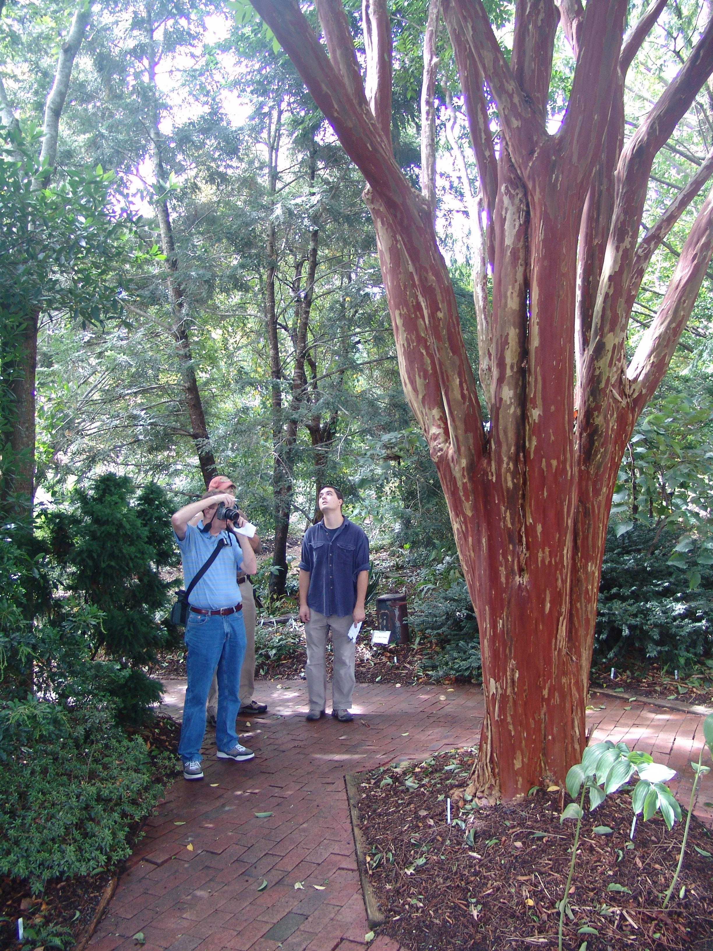 Return To Raleigh Scott Arboretum