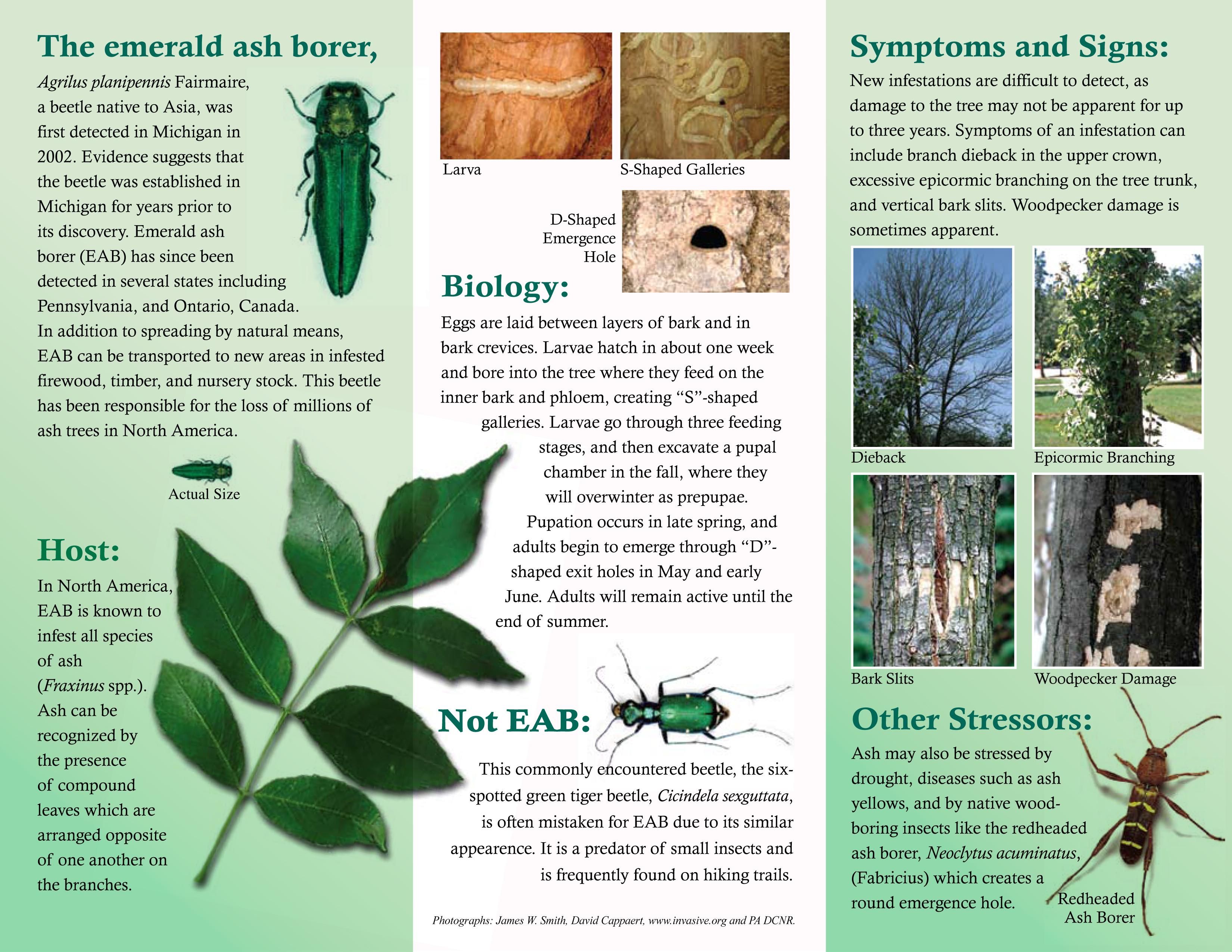 Emerald Ash Borer Brochure