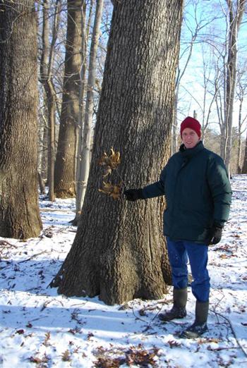 Andrew Bunting-Quercus falcata