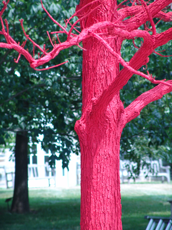 "The striking red of ""In the Shadow of Abracadabra"" photo credit: R. Robert"