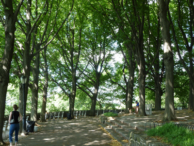 Tilia allee at Fort Tryon Park NYC (1) JWC
