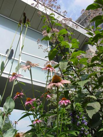 Pollinator Garden at Scott Arboretum of Swarthmore College. photo credit: R. Robert