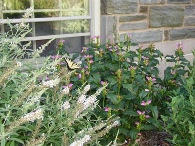 Pollinators Garden. Photo credit: R. Robert
