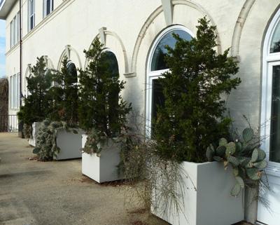 Juniperus virginiana Emerald Sentinel (R) (1) JWC