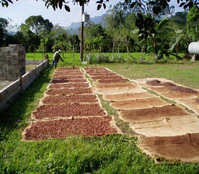 Coco beans layed out to dry in the sun; Creative Commons image courtesy of Steve DeVries