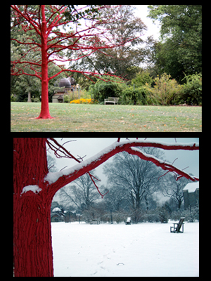 red tree season