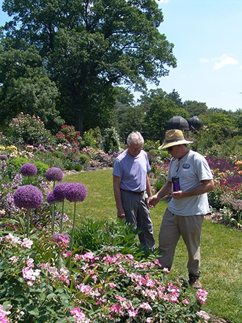 To attract pollinators and beneficial insects to the garden, our gardeners planted several flowering perennials to help sustain their life cycles. photo credit: R. Robert
