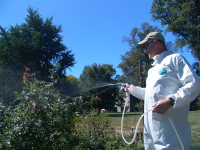 Applying horticultural oil in the Dean Bond Rose Garden. photo credit: R. Robert
