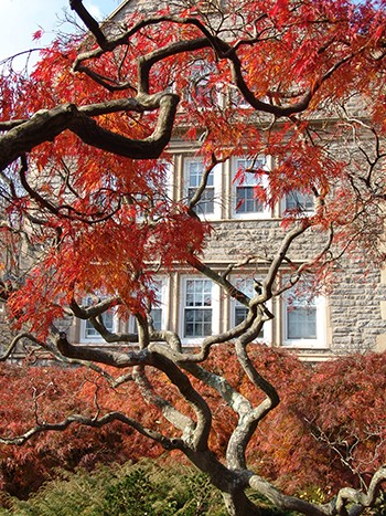Acer palmatum 'Dissectum Ornatum' has great branching structure and fall color. photo credit: R. Manduca