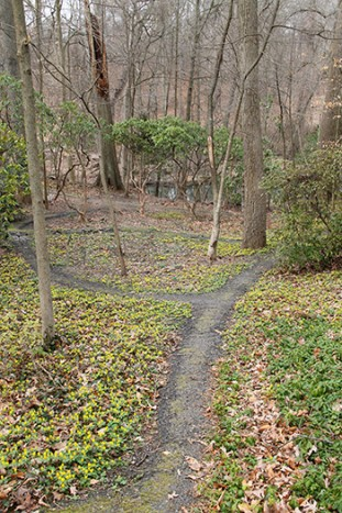 This February, the hillside Wister Garden was covered in winter aconite, Japanese pachysandra, and snowdrops. photo credit: A. Bacon