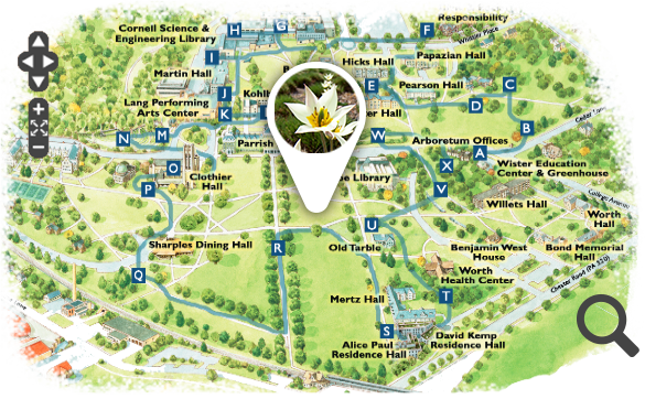 Swarthmore Campus Map Visitor Information for the Scott Arboretum in Swarthmore, PA