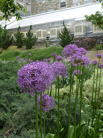 Plants of the week: May 15