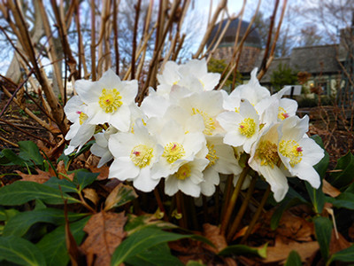 Plants of the Week: February 6
