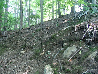 Because the Wister Forest features steep slopes, we noticed erosion near the creek. photo credit: R. Robert