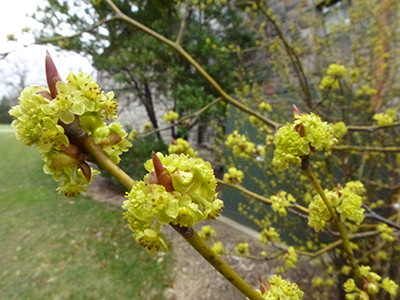 Plant of the Week: April 3