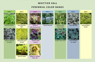 Instead of pops of color, bands of color were created with shade perennials. Chart by M. Tipping