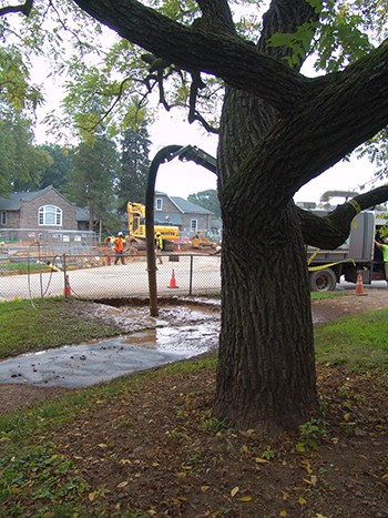 From this angle, you can see that the area under renovation is in the dripline of this mature tree. photo credit: R. Robert