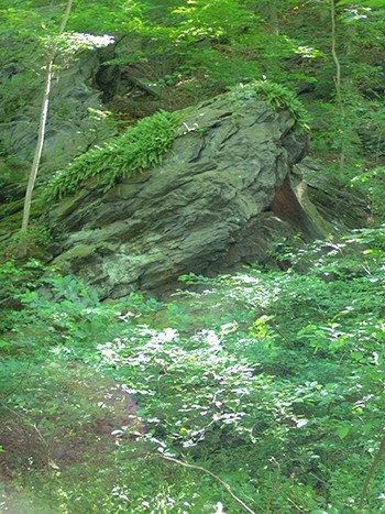 A half-circle of steep slopes where jagged, massive boulders and cliffs form breaks in a dense cover of oak, eastern hemlock, and mountain laurel in the forest. photo credit: R. Robert