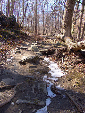 Crum Woods trail in winter