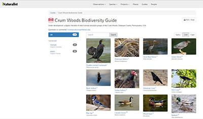 Crum Woods Biodiversity guide on iNaturalist