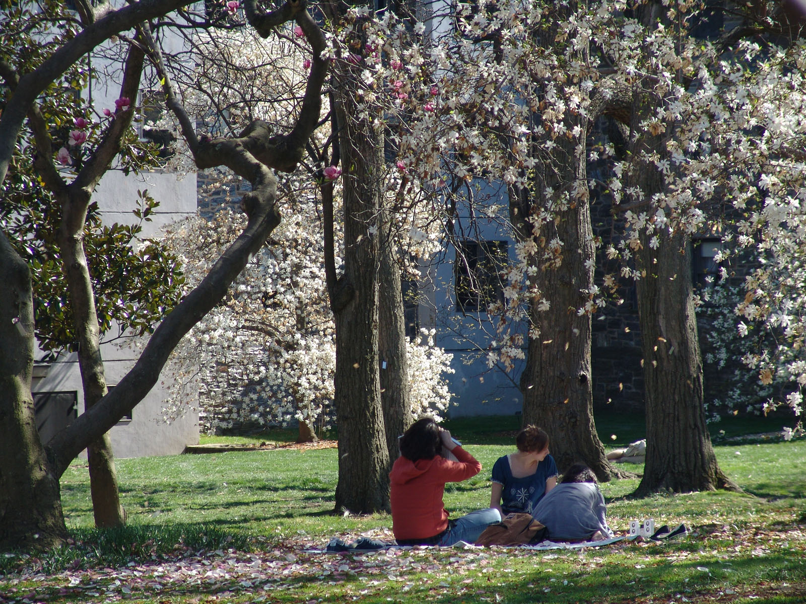 Swarthmore College students under the Magnolia Trees