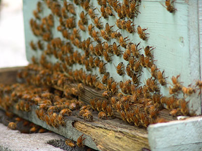 From Flower To Bee To Honey Beekeeping And Beyond Scott