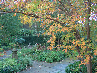 fall in the garden