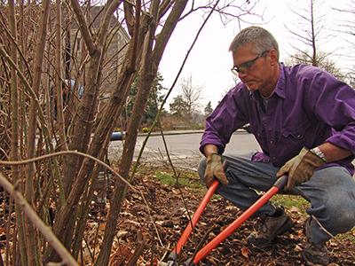 Jeff pruning