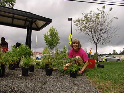 Susan planting