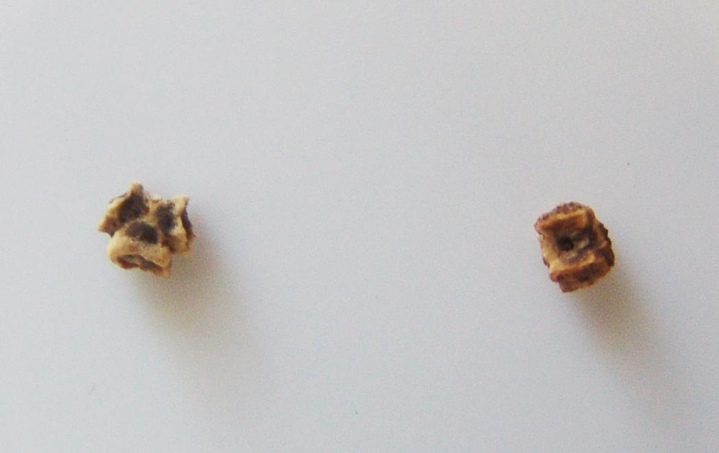 beet or chard
