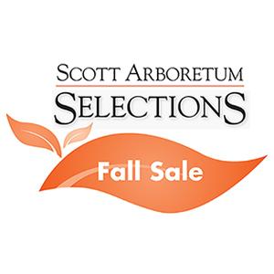 SAS Fall Sale 300 by 300
