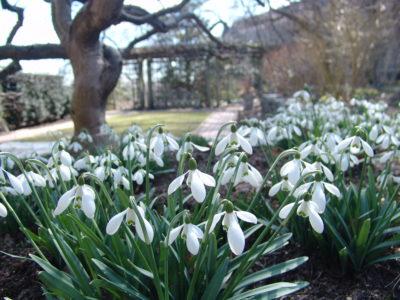Spring 2020 Swarthmore.Tours Archives Scott Arboretum