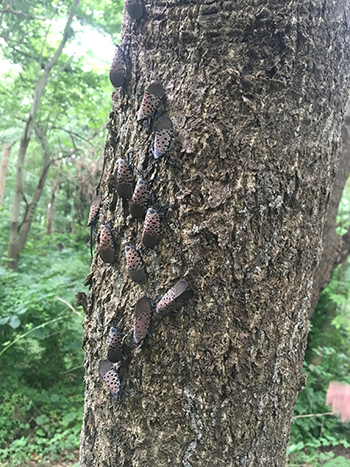 gathering of pests
