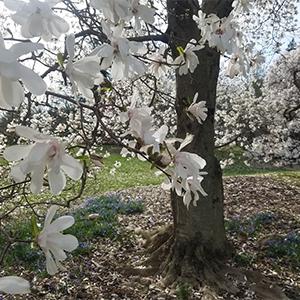 magnolia block