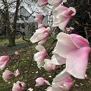 pink magnolia block