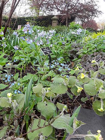 mixed spring ephemeral planting