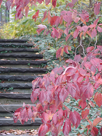 In autumn, foliage turns hues of deep red and purple, creating another seasonal spectacle.