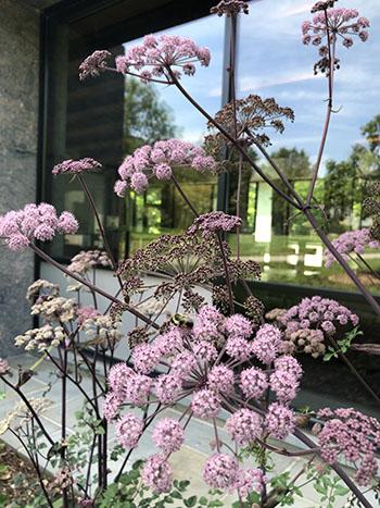 purple flower against glass reflection