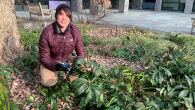 Emily with Hellebores