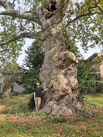 Large tree with Rowan standing in front